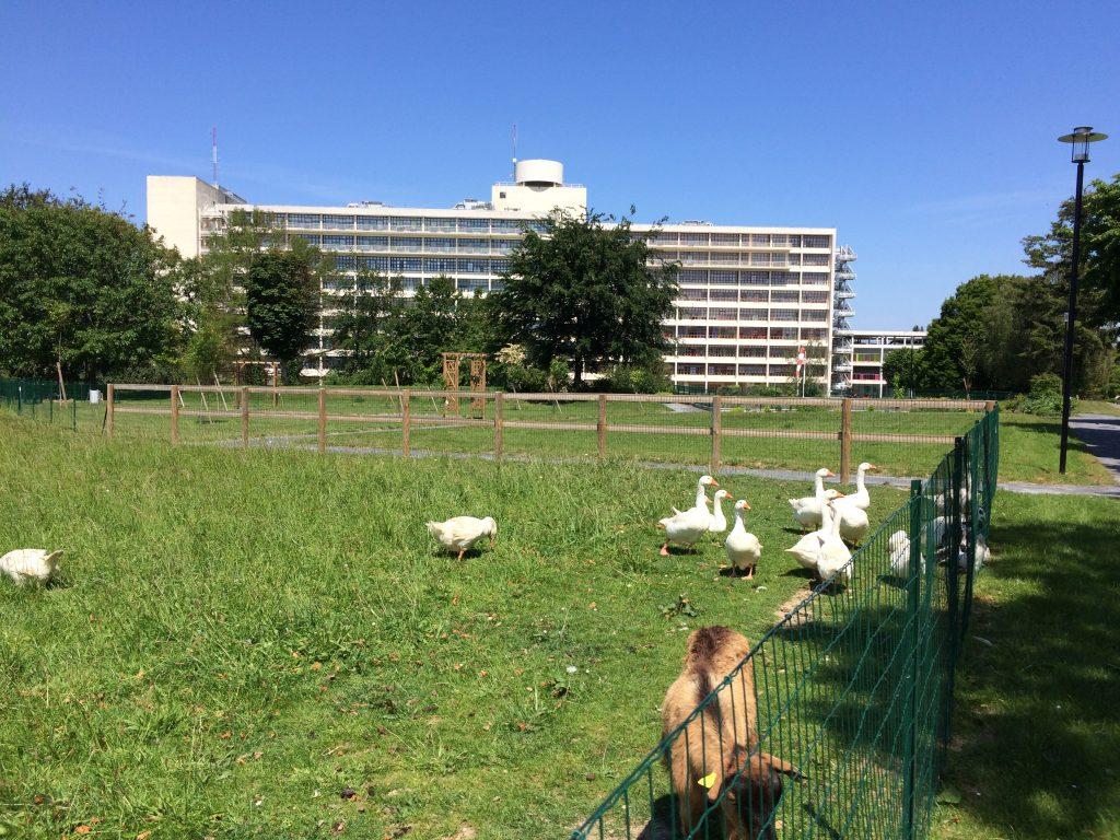 Zone éco-pâturage Parc Ecureuil